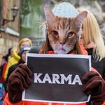 La seconde moitié de cet article s'intéresse à certains aspects religieux de ce sujet - La cause animale: antispécisme et véganismeface aux sociétés et aux religions https://t.co/jxrTTE0wJz via @jfmayer #animalisme #animaux #religions #véganisme #antispécisme