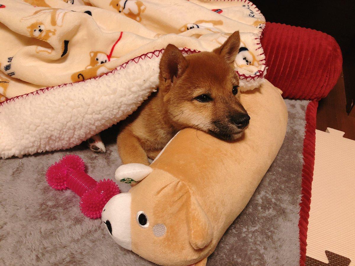 みかん 柴犬