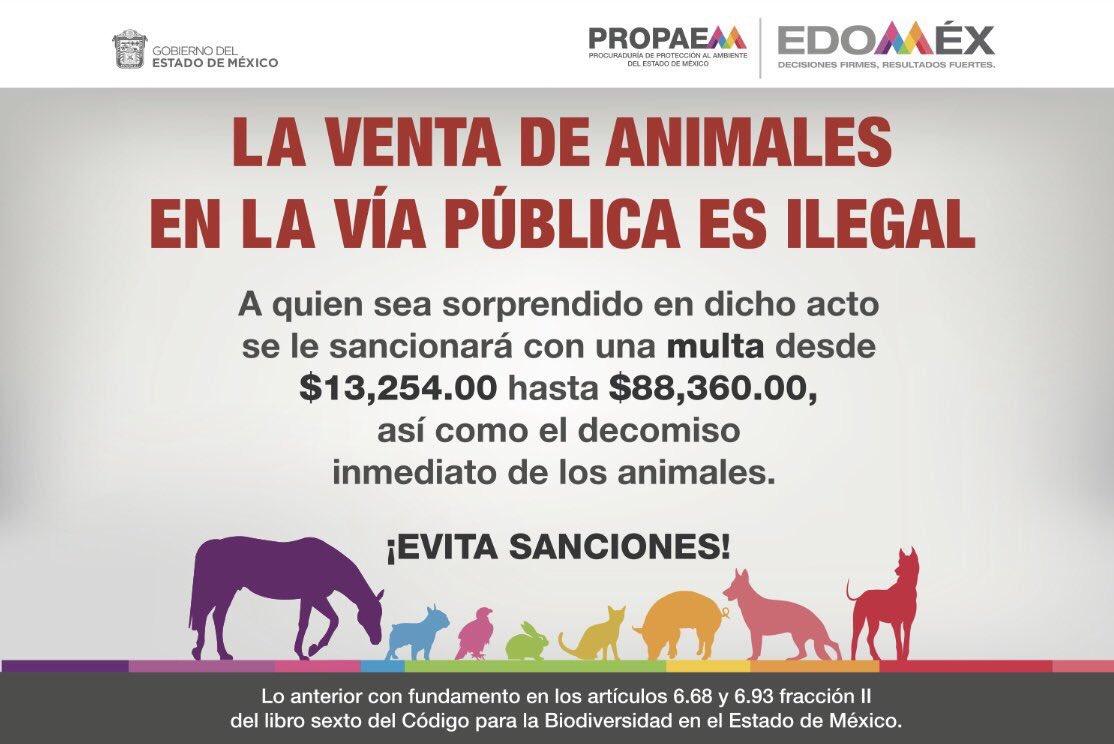 Los animales son seres vivos no juguetes, #NoRegalesAnimales