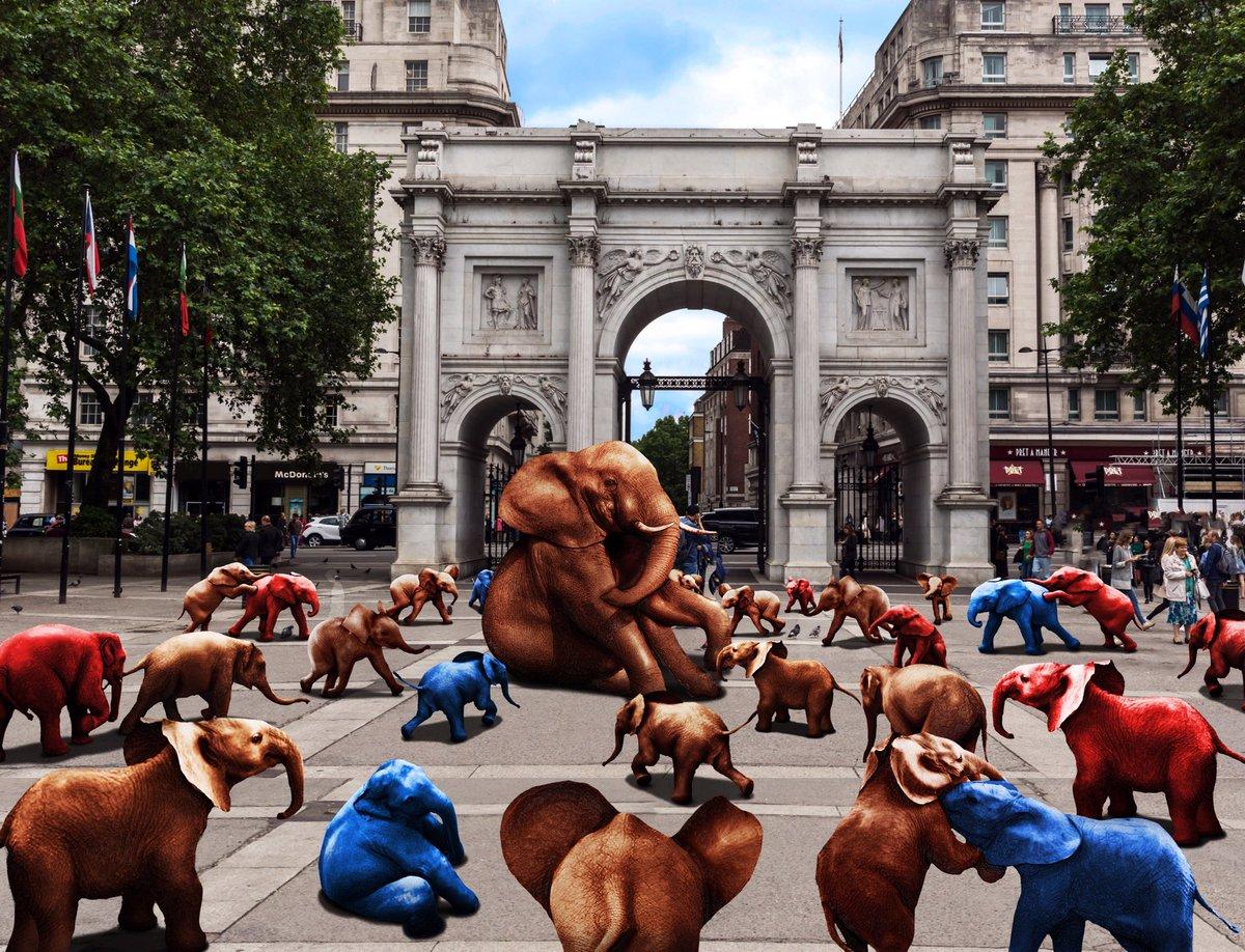 D3SJeYfUwAAv8ub - The elephants of tomorrow