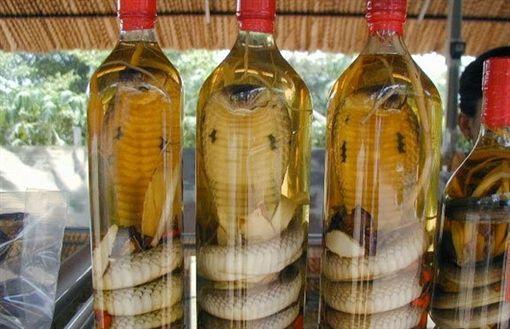 インドでコブラ酒を仕込んだ男性が、一ヶ月後に蓋を開けたところ、中のコブラが生きており男性はコブラに噛まれて死亡 蓋の締め方が甘かったか、アルコール度数が弱すぎたと考えられるとのこと・・ 活捉拿去泡酒!眼鏡蛇竟復活咬死他