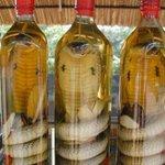 コブラに噛まれた!インドの蛇酒作りで男性死亡。