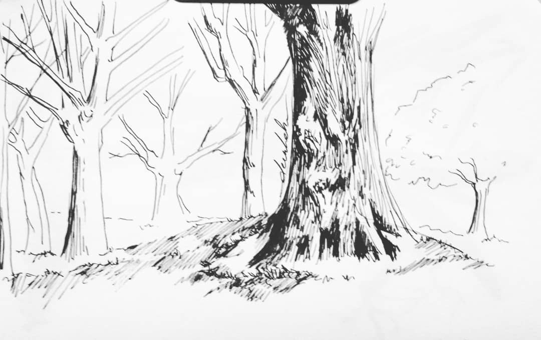 Park sketch 🏞 #dailyart #dailyillustration #park #trees #nature #quickdoodle #quicksketch https://t.co/4hlauRFzrR