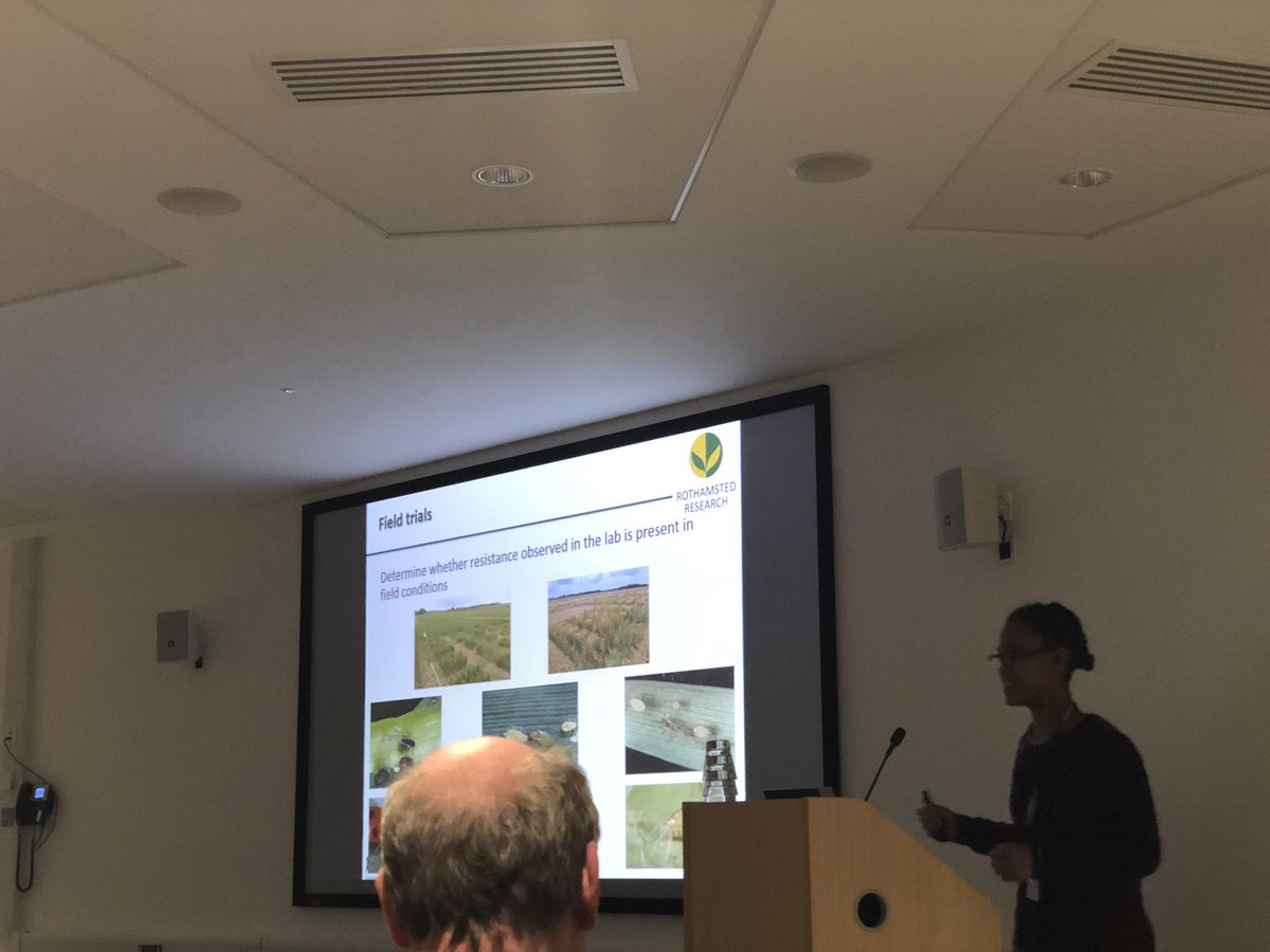 Fantastic talk from @amma_simon at #AphidSIG19, who is elucidating the mechanisms of aphid resistance in ancestral wheat 🌾