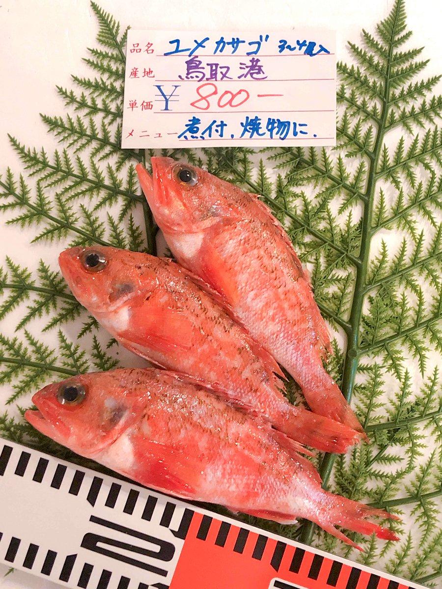 【4/5(金) 「鳥取港海鮮市場 かろいち」の通常売り場が12:00〜13:30で開催】 *ユメカサゴ:1盛3〜4尾入り *活モサエビ:1盛10尾入り そのほか「耳イカ」や「のどぐろ一夜干し」などもご用意。 http://uoichi.today #UOICHI  #鮮魚 #通販 #お取り寄せ #鳥取 #かろいち