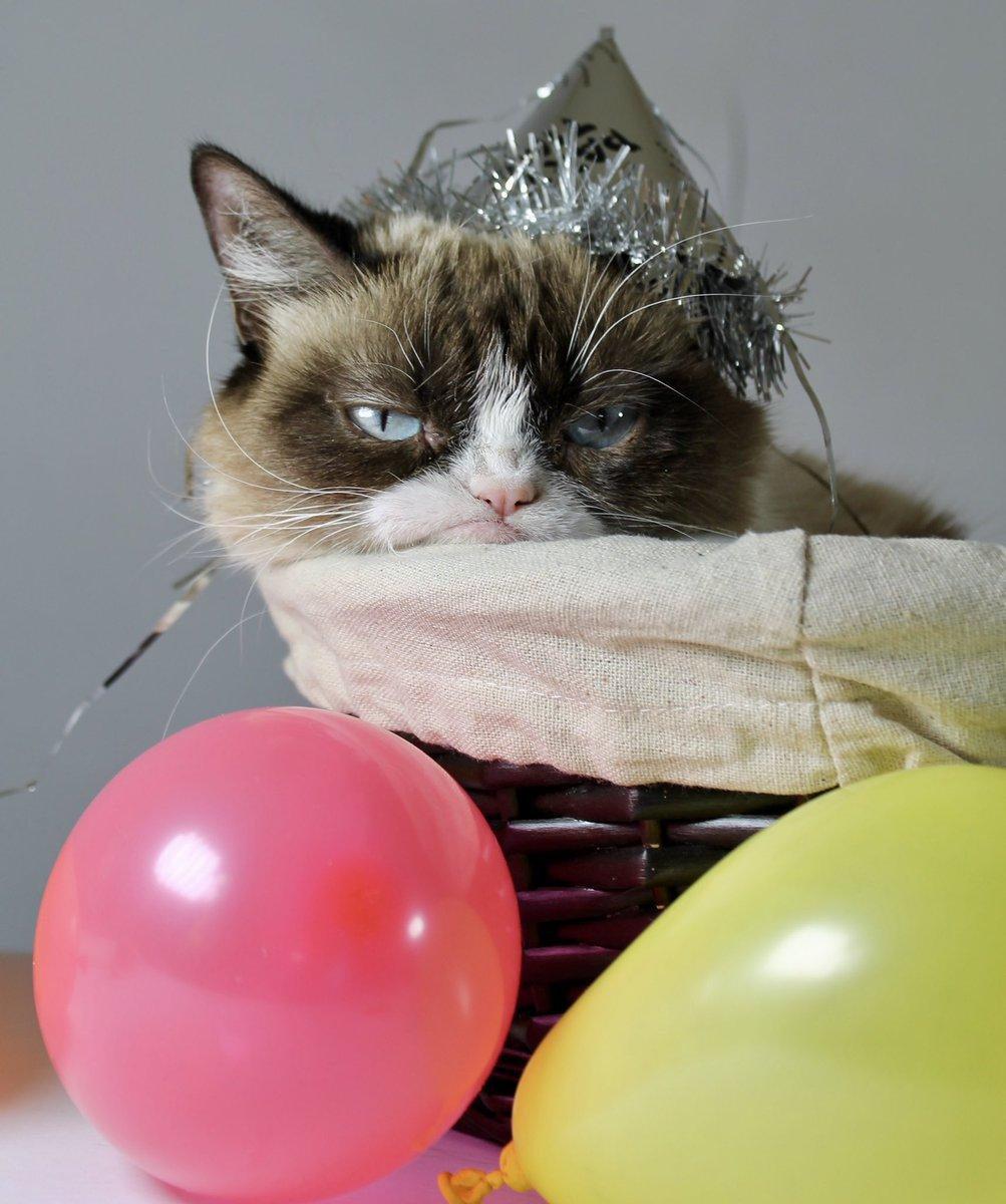картинки кошачье день рождение эпоха оставила одно
