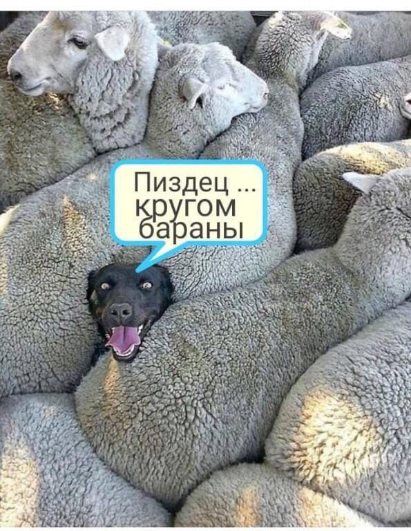 Ліквідація ТСК, закони про імпічмент і референдум: Тимошенко закликала ВР усунути безконтрольність будь-якого майбутнього президента - Цензор.НЕТ 1350