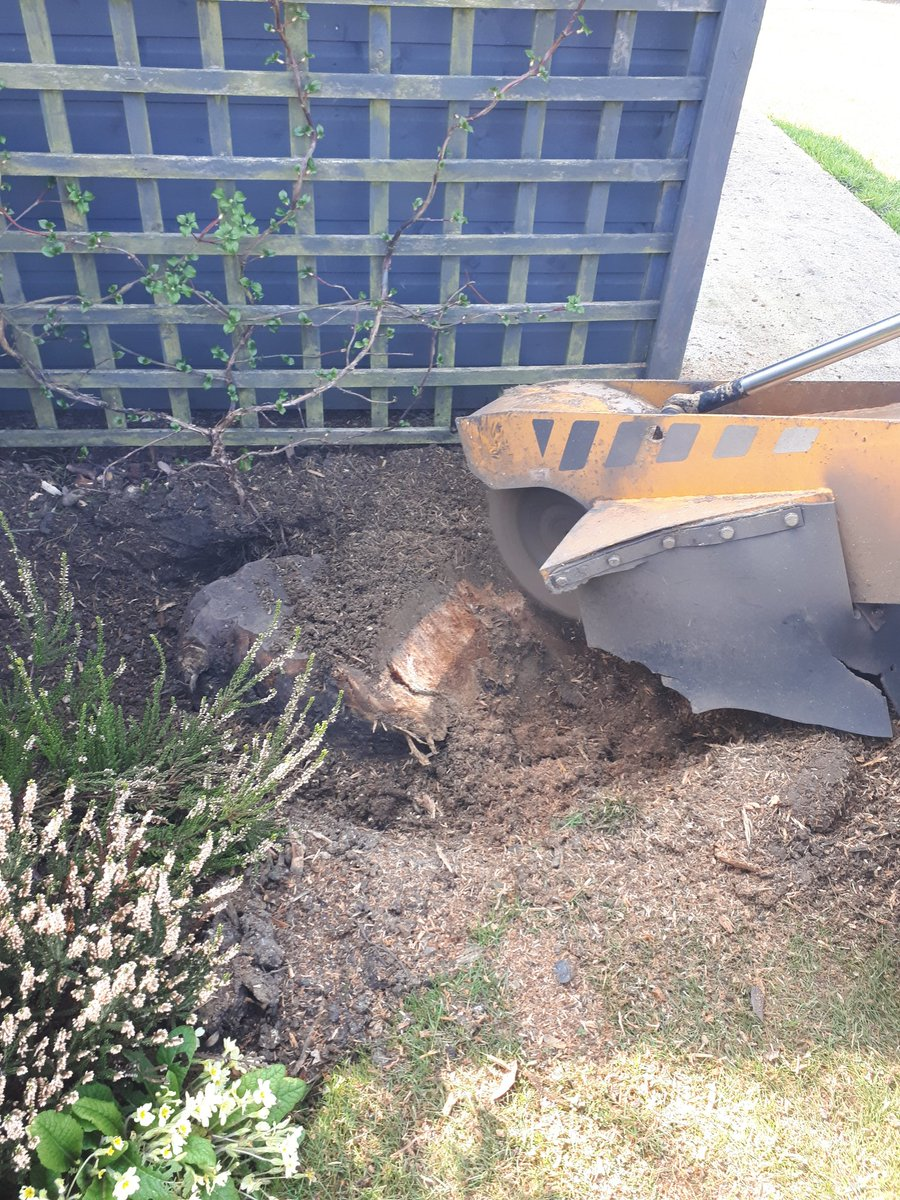 Tree stump grinding a conifer tree stump in Great Baddow, Chelmsford, Essex. The tree stump removal was making way for a…