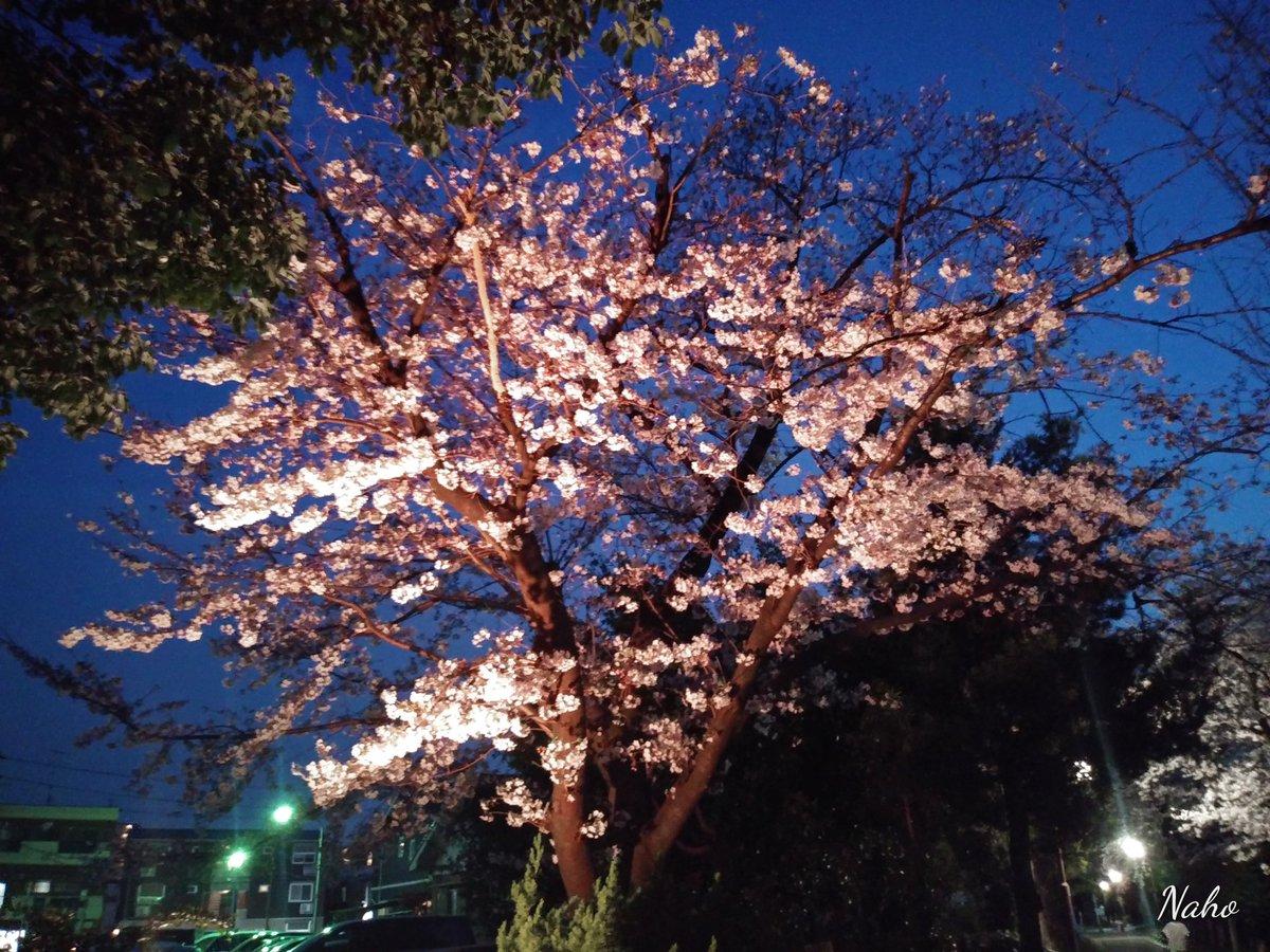 上娘の幼稚園時代からのママ友とお花見宴会🌸🍺🌸 暖かくて、桜も満開で、 楽しかった🌸🌸🌸