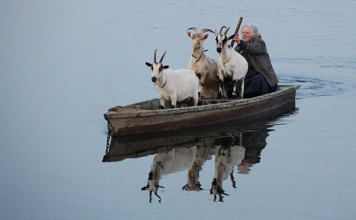 Анимация, трое в лодке прикольные картинки