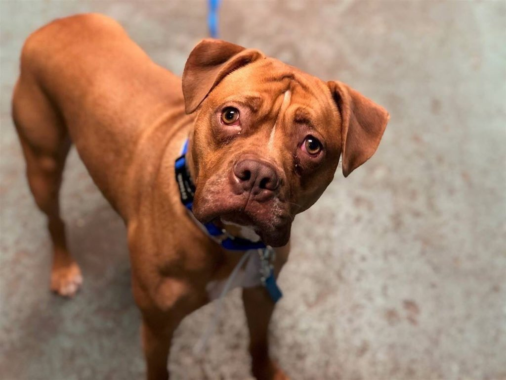 RAMBO'S PLEDGES ARE INCREDIBLY LOW. All the others on Saturday's @NYCACC death list are doing well. Our pledges via @chortletown can attract a Rescue, adopter or foster to keep poor Rambo alive. Just sharing his story raises his chances so PLEASE RT! https://www.facebook.com/mldsavingnycdogs/photos/-to-be-killed-462019-dogs-have-that-innate-sixth-sense-and-they-know-when-someth/955850604601210/…