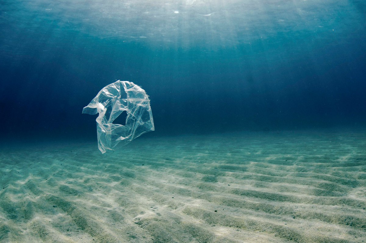Did you know that more than 8 million tons of #plastic is dumped into our #oceans every year? We ALL need to do our part in keeping our oceans clean. Stop single use plastics from entering our oceans by purchasing #reusables!   Visit http://shop.seashepherd.org (📸: Cherie Bridges)