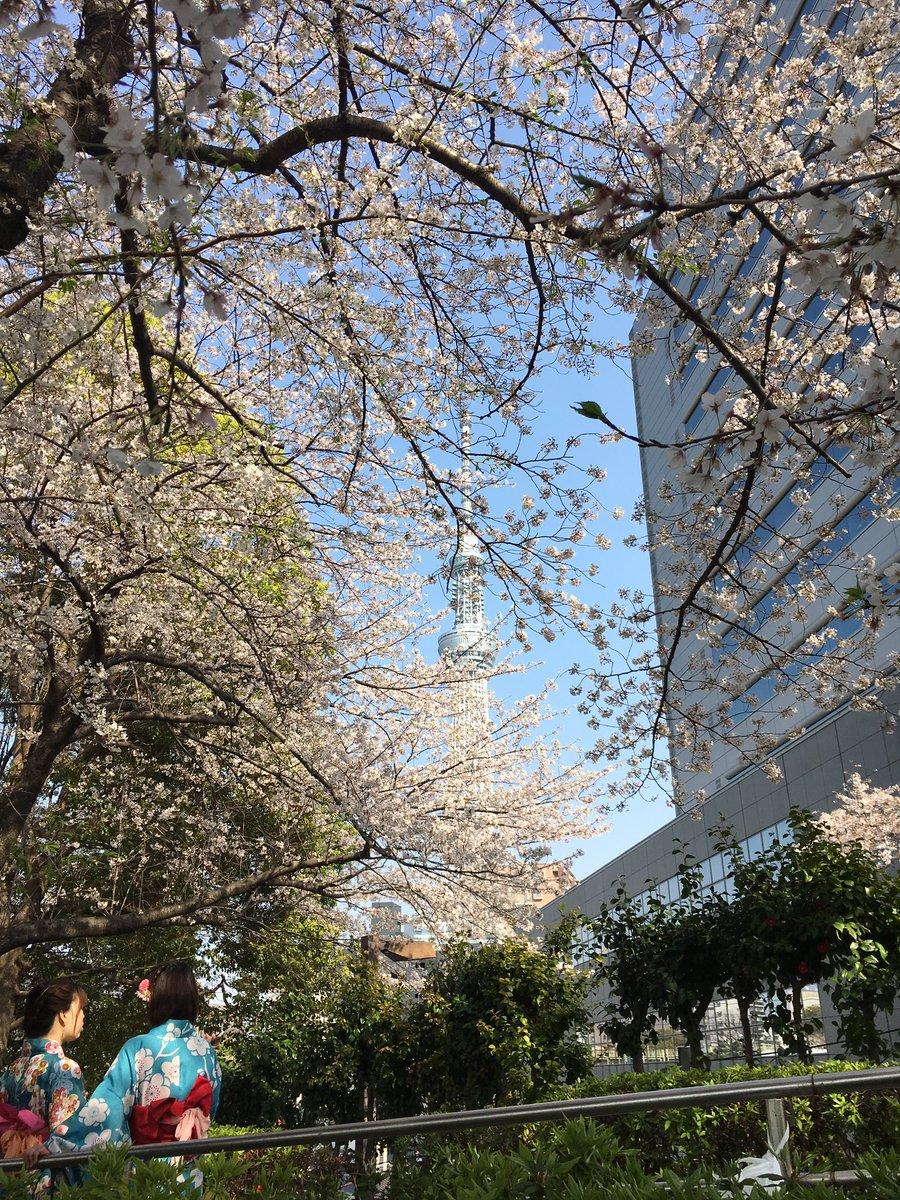 隅田公園にてお花見 たまたま居た浴衣の娘がめちゃ映えた 惣菜買いまくった #隅田川ブルーイング で生ビールを堪能した pic.twitter.com/m5N89A2B62