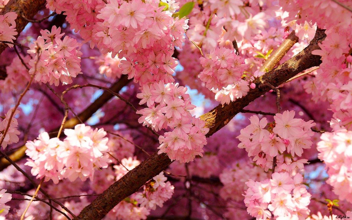 spring wallpaper free - HD2560×1600