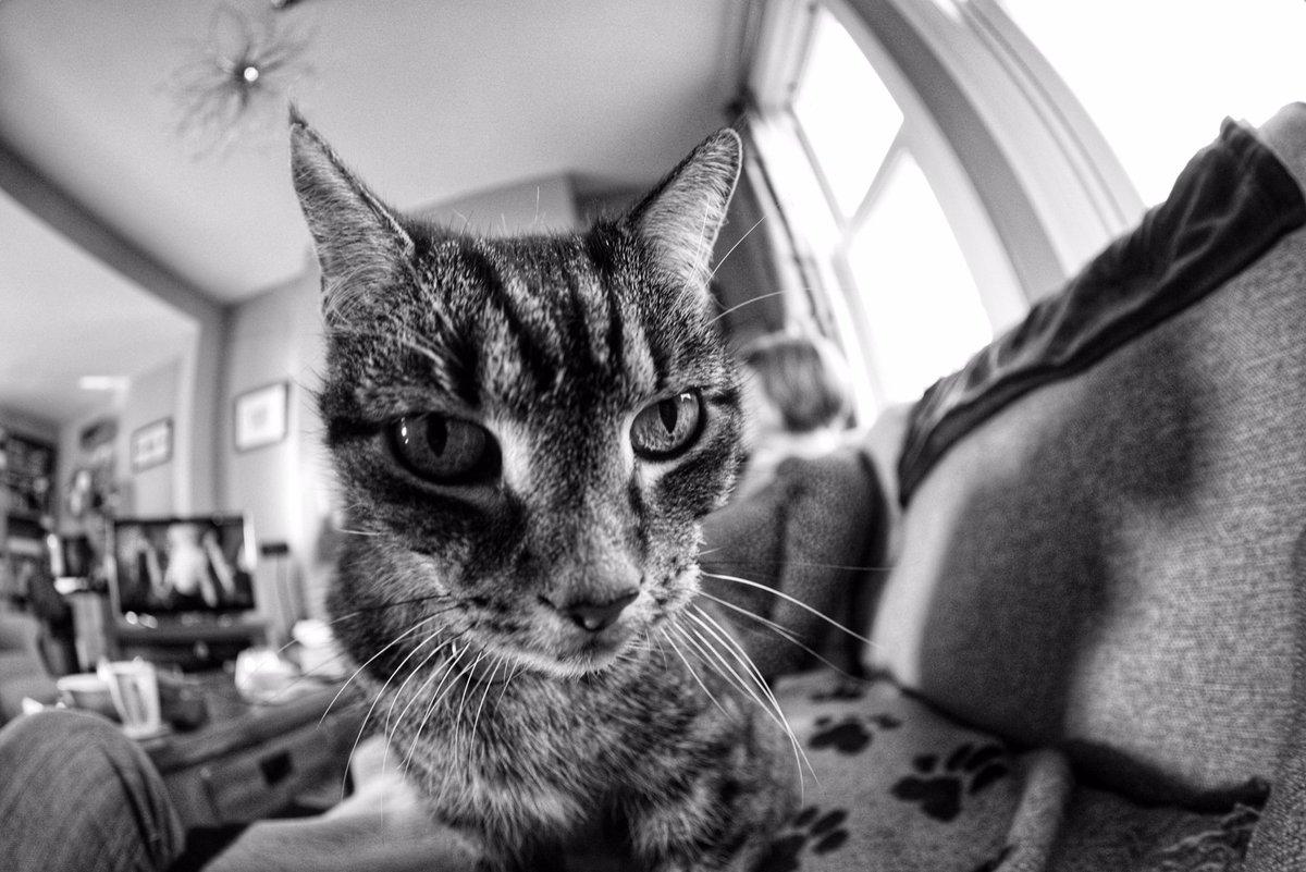 Curiosity! #Caturday #cats #blackandwhitephotography #SaturdayMorning #photography #art #beauty #pets #Nikon #ThePhotoHour #DailyPhoto #relationshipgoals #home #Tigers #livingmybestlife #livingroom #EarthHourUK #PintoFotografia #ShareTheLove #fisheye #northwestuk #cuteness