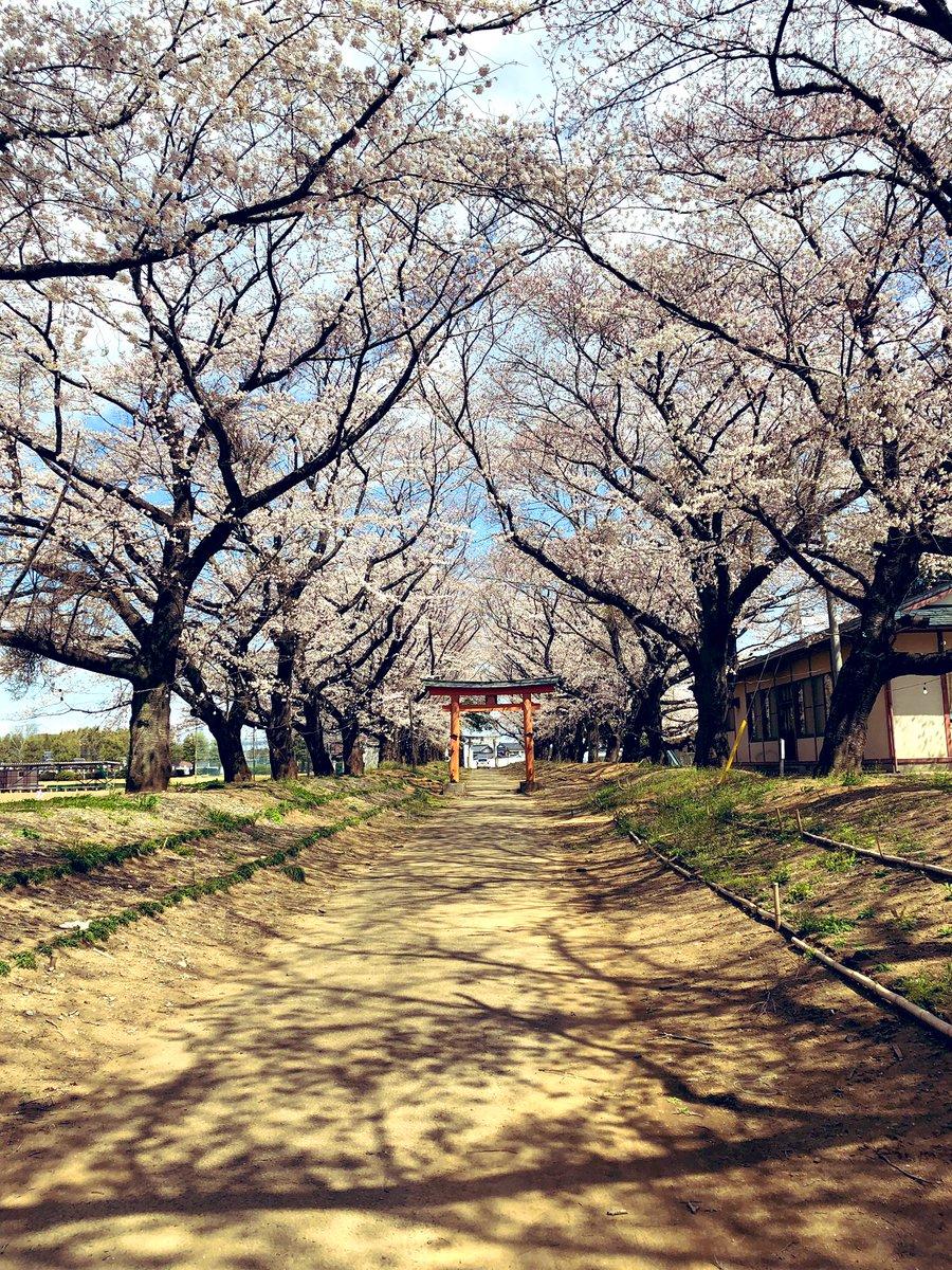 先日子供の入学式がありました?✨平成最後の?沢山の資格を取って、就職に有利にして欲しいです?平成も後わずか?バタバタして終わりを迎えそう?桜と共に綺麗に散って終わって行くのかな〜?✨