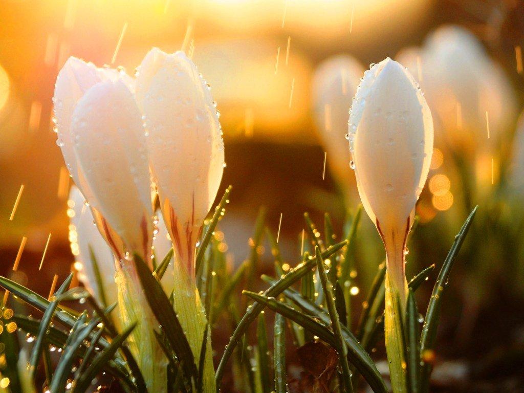нахожусь въезде весна картинки интересные приезжала москву делам