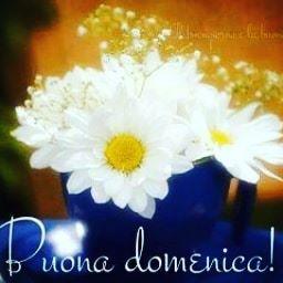 Coccinella53 On Twitter Buongiorno A Te Ariel Ti