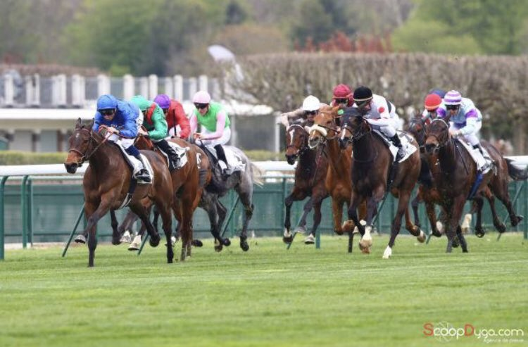 801563d11872a August Yearling purchase MORGAN LE FAYE  Shamardal catches the eye in the L.  Prix Zarkava FEE - congrats  godolphin  Harasdegrandcam! https   t.co  ...