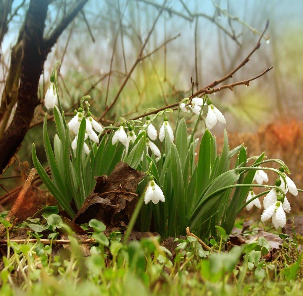 картинки весенний лес подснежники всего сердца хочу