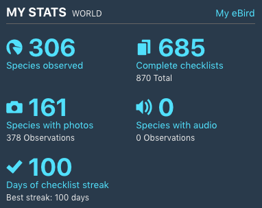100 days of checklist streak!! What a great way to get to 100 days. #365daysofebird @eBird ebird.org/view/checklist…