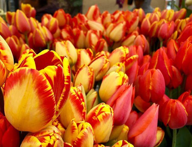Fresh tulips #seattle #wa #pnw #spring #k5spring #tulips bit.ly/2FY7yhJ