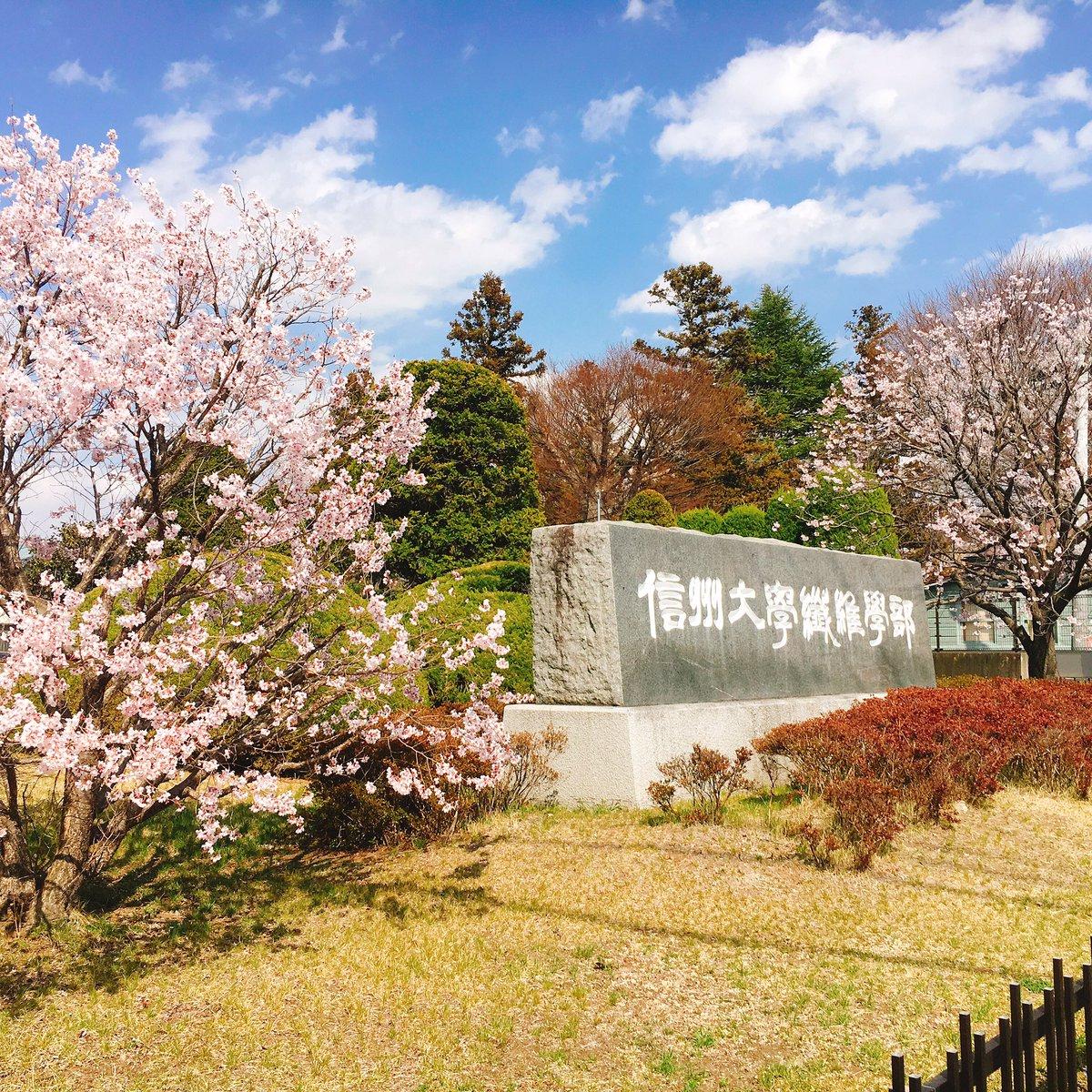 かの就職無理学部には春が来ないそうですが日本唯一の名誉ある繊維学部には春来てまーすま、そういうことですよね!