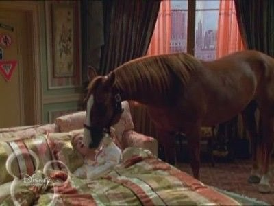 i take my horse to the hotel room