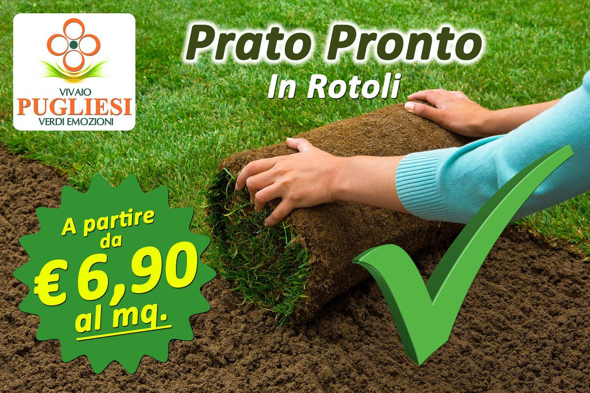 Vendita Prato A Rotoli Pistoia vivaio pugliesi (@vivaiopugliesi) | twitter