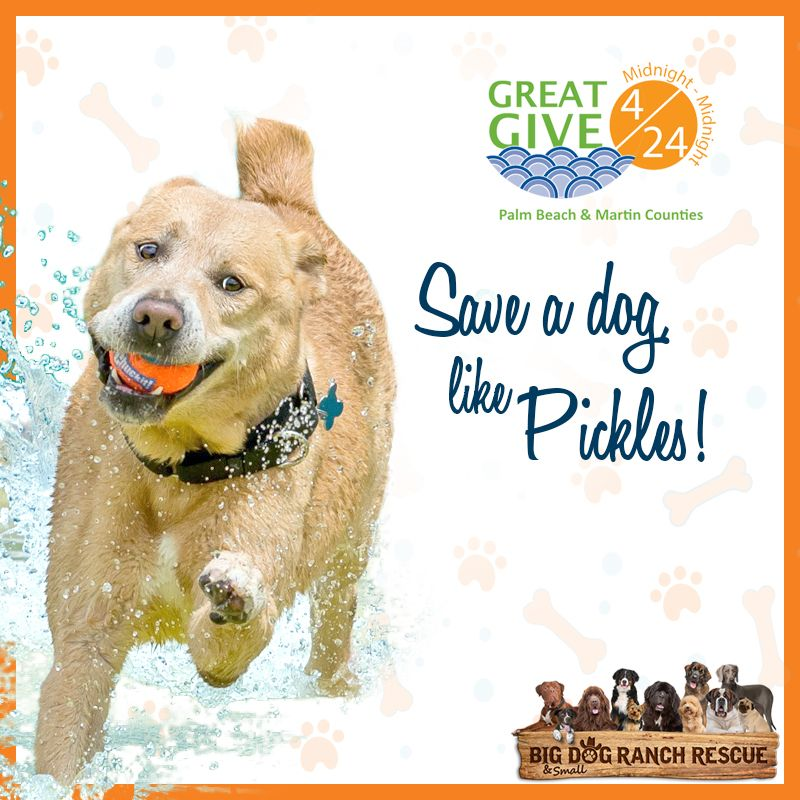 The real success of #GreatGive424 will not be how much money we raise, but the tremendous impact those dollars will have on dogs, like Pickles! A $50 donation today will allow us to spay/neuter one dog upon their intake. 🐾🥒 Donate now! > https://buff.ly/2UHJglu #save500