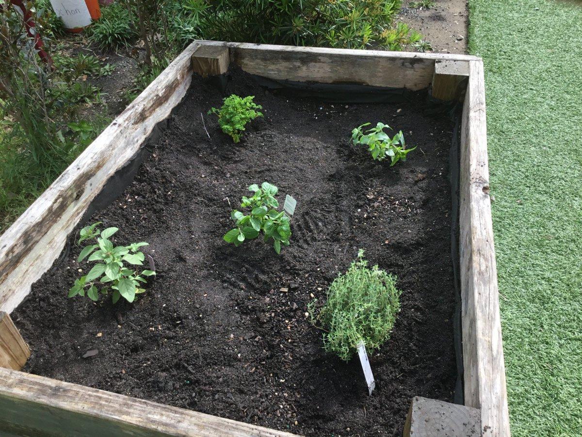 """Planter Herbes Aromatiques Jardiniere les cm d'eb nola on twitter: """"#jardincm1 #classedugoût"""