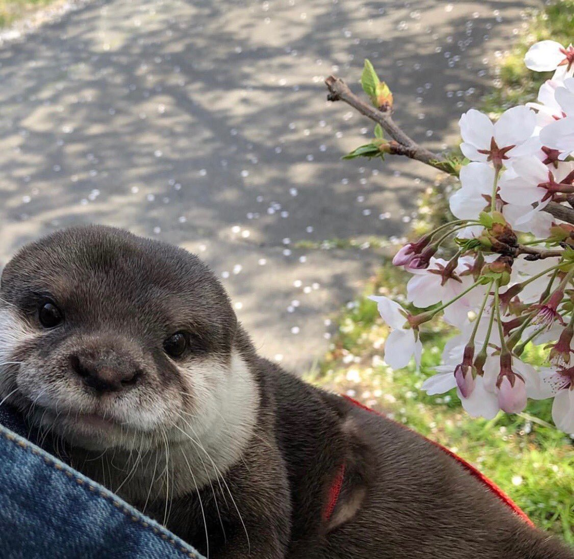 everyone have a beautiful day here's an otter