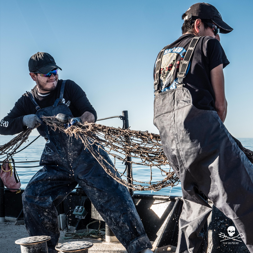 As a direct-action organization, #SeaShepherd works in partnership with the government of #Mexico on #OpMilagro to protect the #vaquita refuge.   Learn more and get involved: http://seashepherd.org/milagro