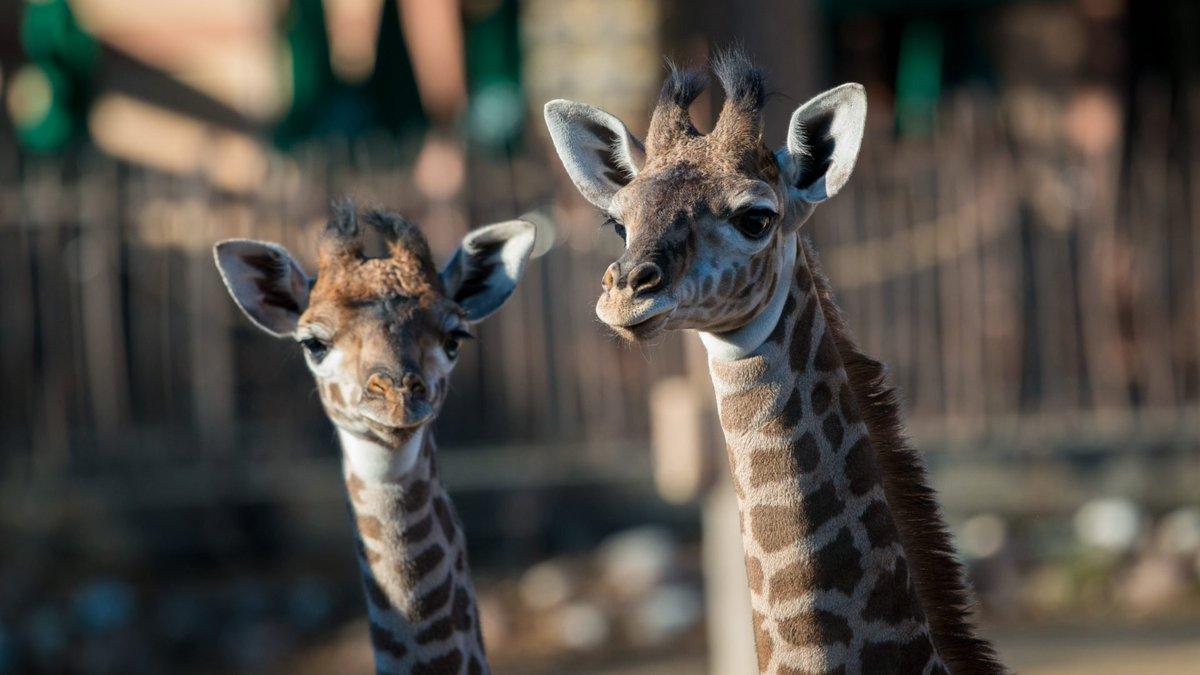 Houston Zoo on Twitter: