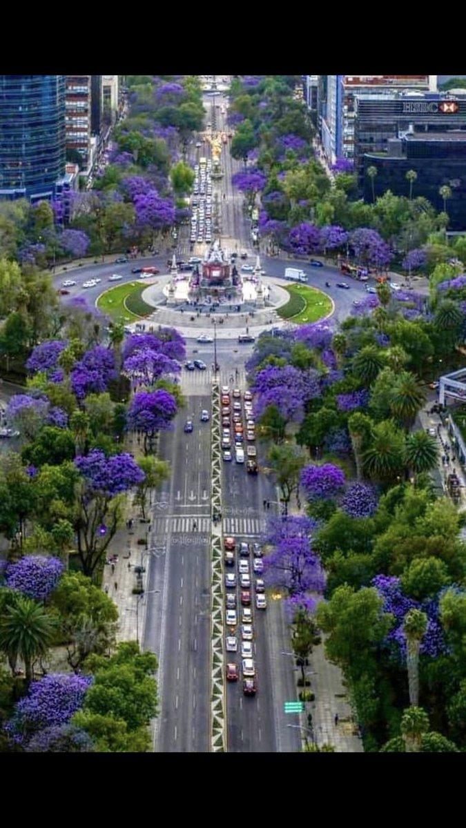 La hermosa Ciudad de México en tiempos de jacarandas