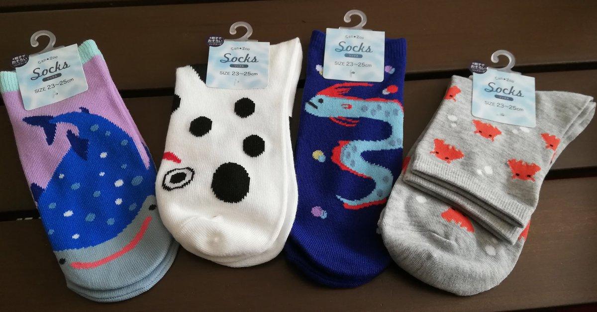 test ツイッターメディア - キャンドゥで見つけた靴下たち メンダコ、チンアナゴ、リュウグウノツカイにジンベイザメ  可愛くて即買い(*•̀ᴗ•́*)و ̑̑  #キャンドゥ  #靴下  #さかな https://t.co/VsGY9Ykb26