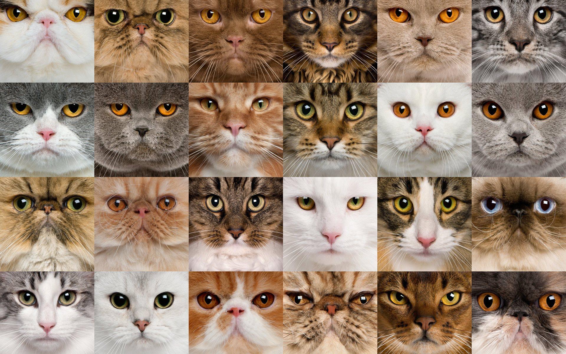 решение все кошачьи список с картинками этот колхозник президентом