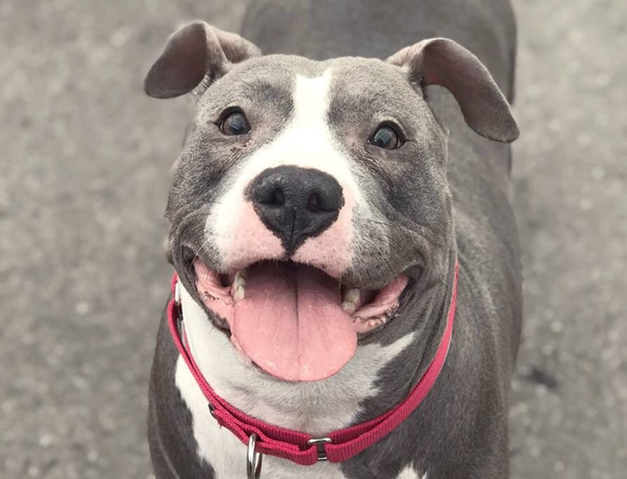 BELLA LOVES KIDS. SHE MAY NEVER SEE ANOTHER ONE. A good girl stuck at @NYCACC and facing death as early as TODAY. She needs our pledges via @chortletown to attract a Rescue, or an Adopter/Foster. Mostly she needs her story shared so PLEASE RT! https://www.facebook.com/mldsavingnycdogs/photos/-to-be-killed-492019-money-can-buy-a-fine-dog-but-only-love-can-make-her-wag-her/957785831074354/…