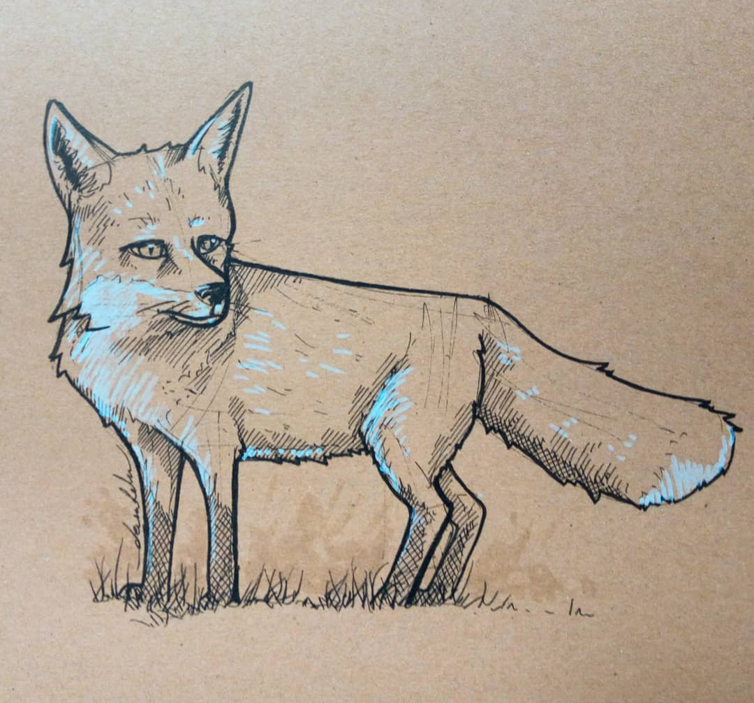 Foxy 🦊 #fox #dailysketch #dailyillustration #animal #animalstudy #animals https://t.co/M8kDq3Gi0G