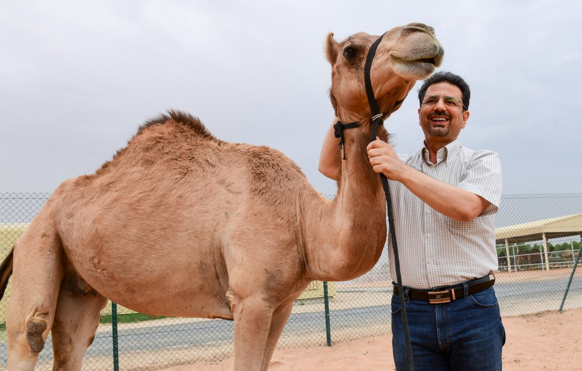 World's first cloned female camel celebrates 10th birthday in #Dubai  #ClonedFemaleCamel #Cloning #DNG #Dubainewsgate #Injaz #IVF #Research #Researchers #SurrogateCamel #Technology #UAE