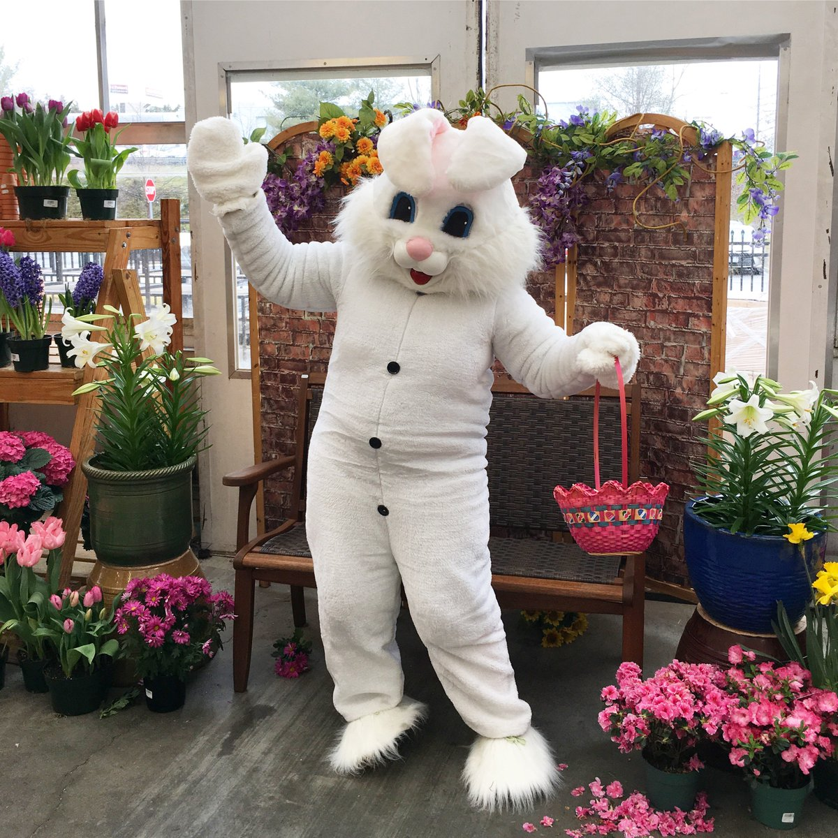 Visit our website for dates and times at each Adams location. http://adamsfarms.com/events/easter-bunny/ …pic.twitter.com/5Catfze5jQ