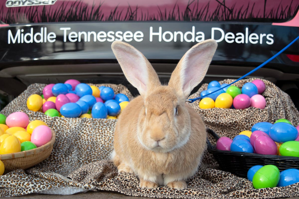 Honda Dealers In Tennessee >> Nashville Zoo On Twitter It S Been A Busy Month For Andre