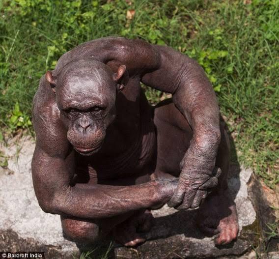 全身脱毛後大猿化のオラ