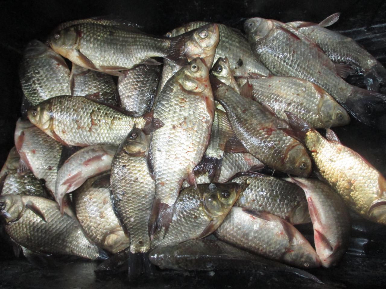 Рыбалка на озере мостовом 2019