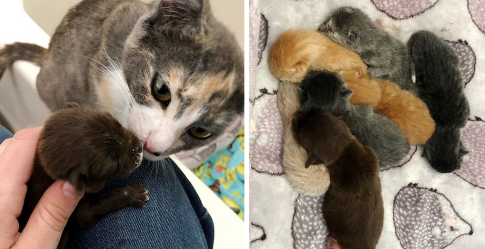 Rescued cat gives an orphaned puppy a family and raises him along with her kittens. See full story: lovemeow.com/cat-orphaned-p…