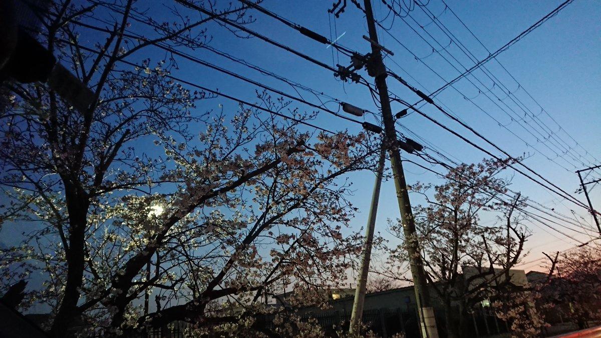 今日は #フォトの日 ですね?4月は桜が咲き、入学や就職など新生活のスタートもあり、写真を撮る機会が増える時期ということで、フォトの日なんですって?4月感はありませんが最近撮った #フォトジェニック な写真をUPしてみます❣️#電信柱 #電柱 #和歌山トヨペット #toyopetone #トヨペットーン