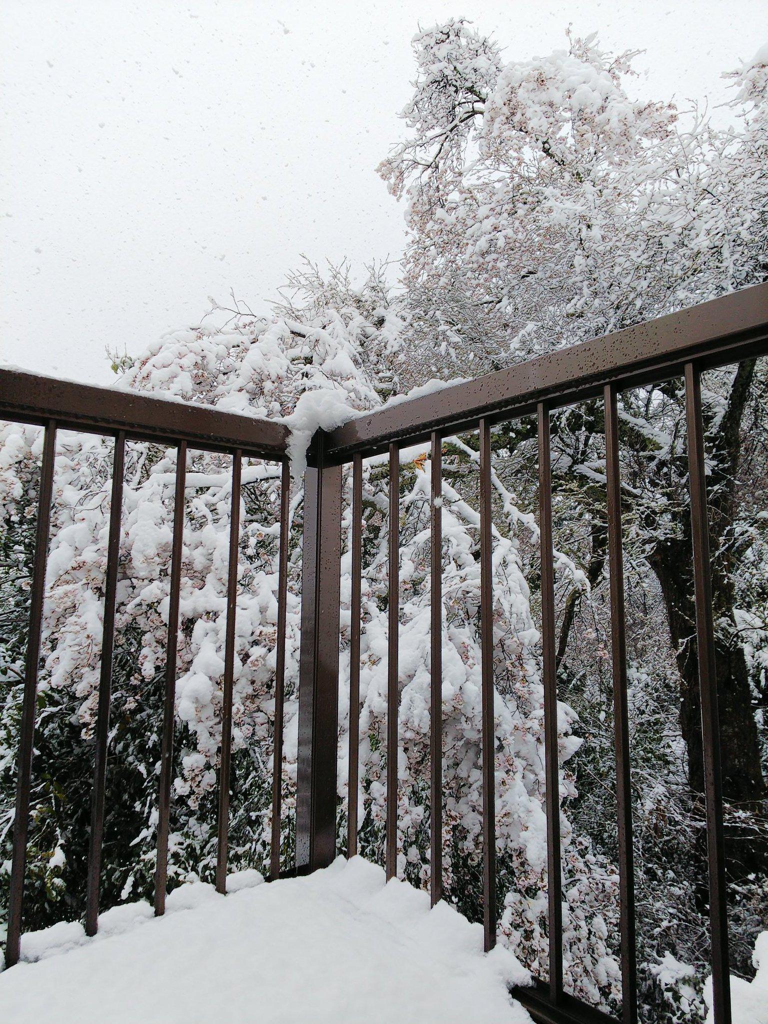 画像,昨日の晴天はどこへ?うちの山桜がぁぁ停電しちゃって、寒いし・・・仕事行きたくない😩 https://t.co/pkkeJZWgrP…