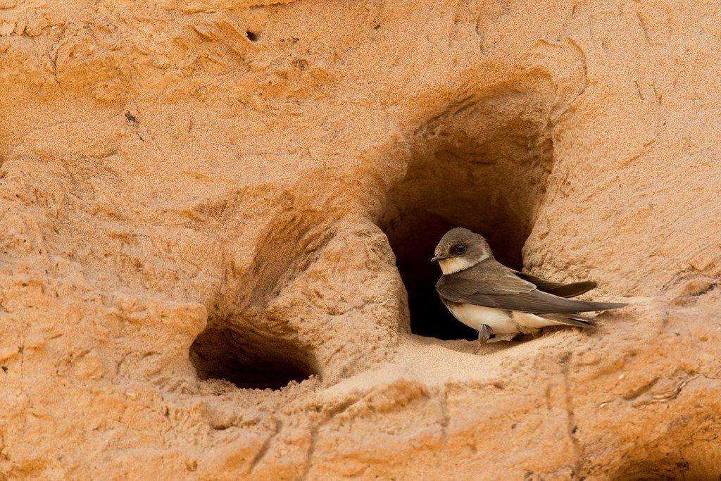 A huge THANK YOU to EVERYONE who showed they cared for #Nature. Without your voices, we wouldn't have been able to reach the right resolution for #BactonCliff #SandMartins. More info here: http://natu.re/3RWAaR . It's time for us to #LetNatureSing