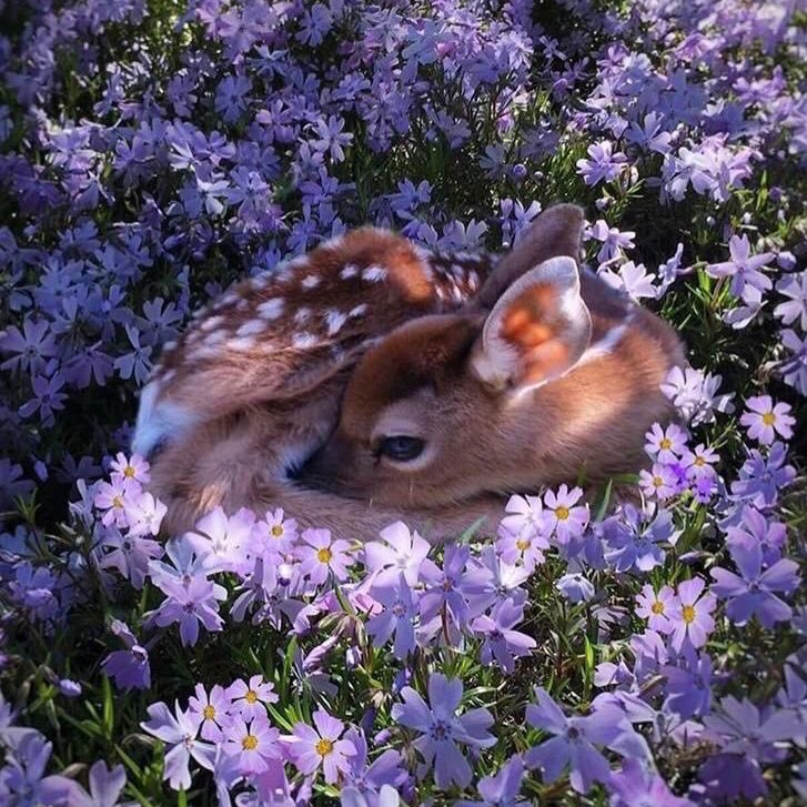 baby animals surrounded by flowers is EXACTLY what the timeline needs.  [ #BBMAsTopSocial BTS @BTS_twt ]<br>http://pic.twitter.com/ozyXARy6GQ