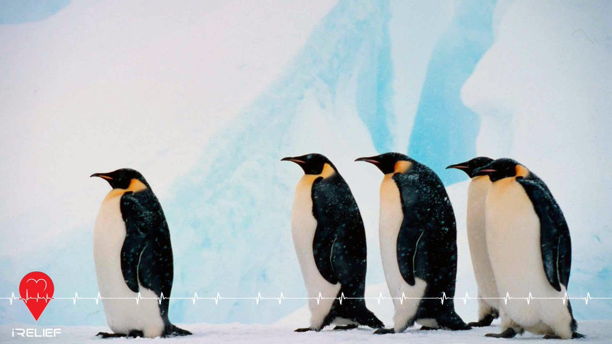 61e5cf826510 WorldPenguinDay - Twitter Search